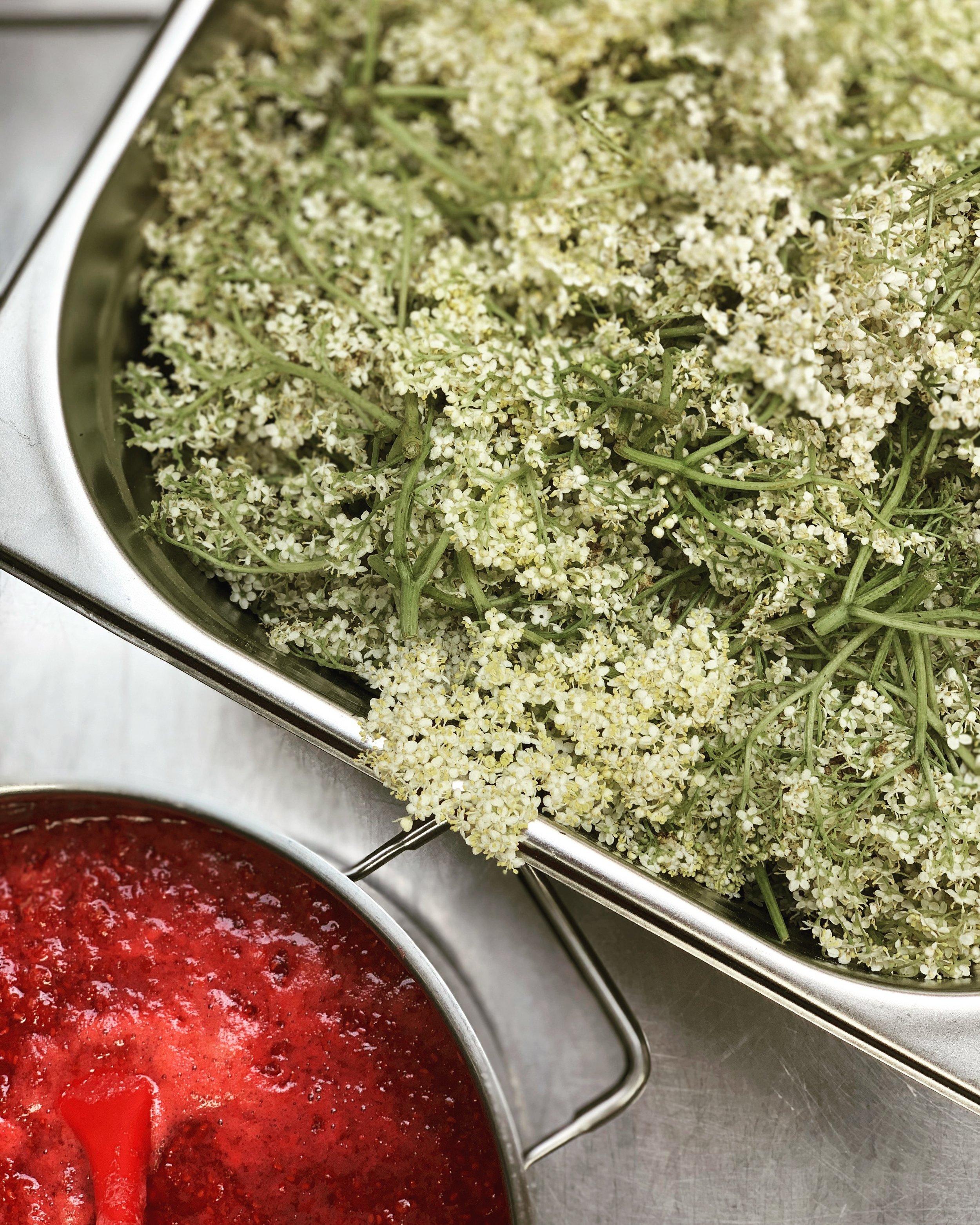 The Hill Food Company elderflower pickings.jpg