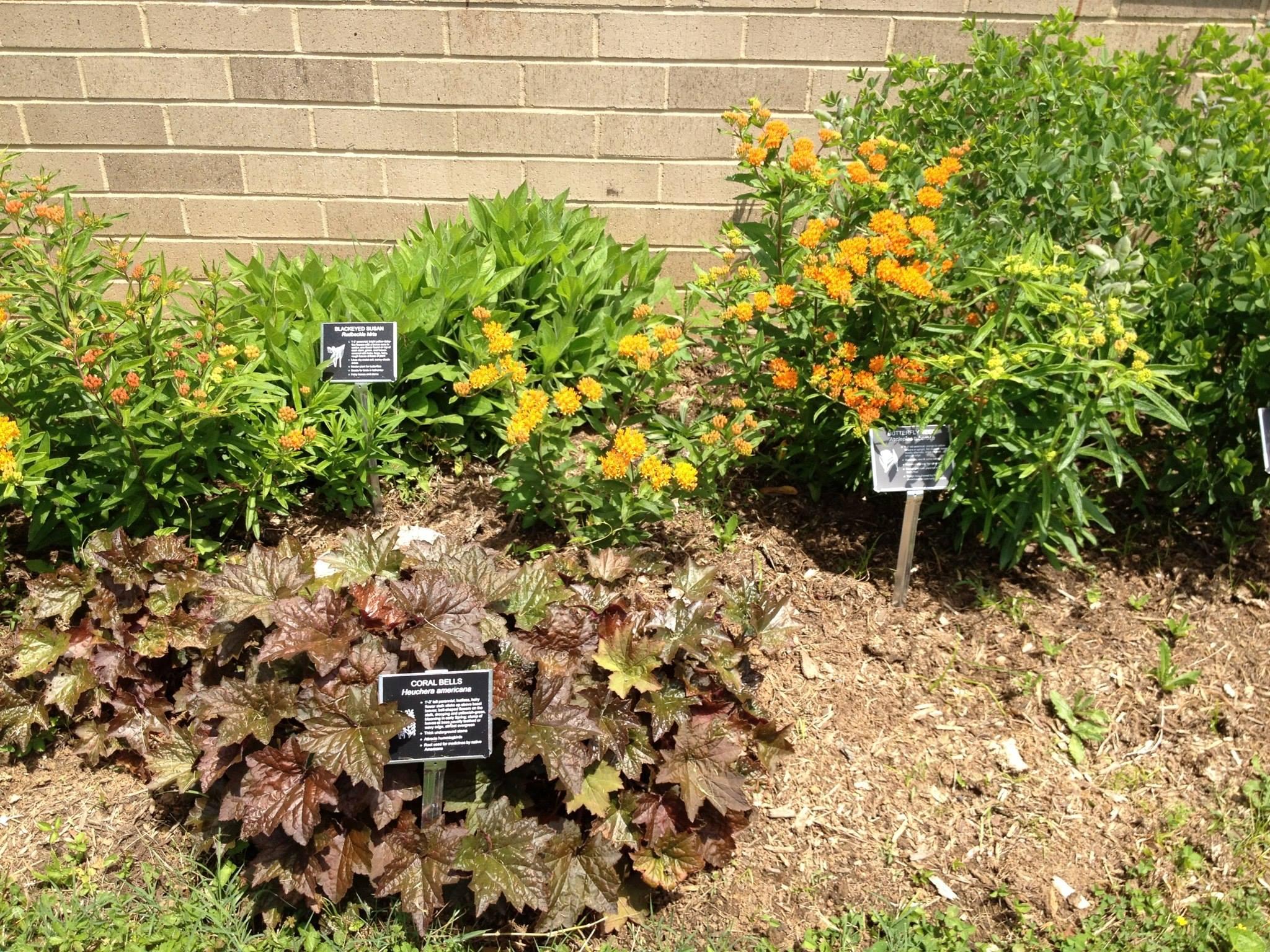Native plant garden in Fairfax County