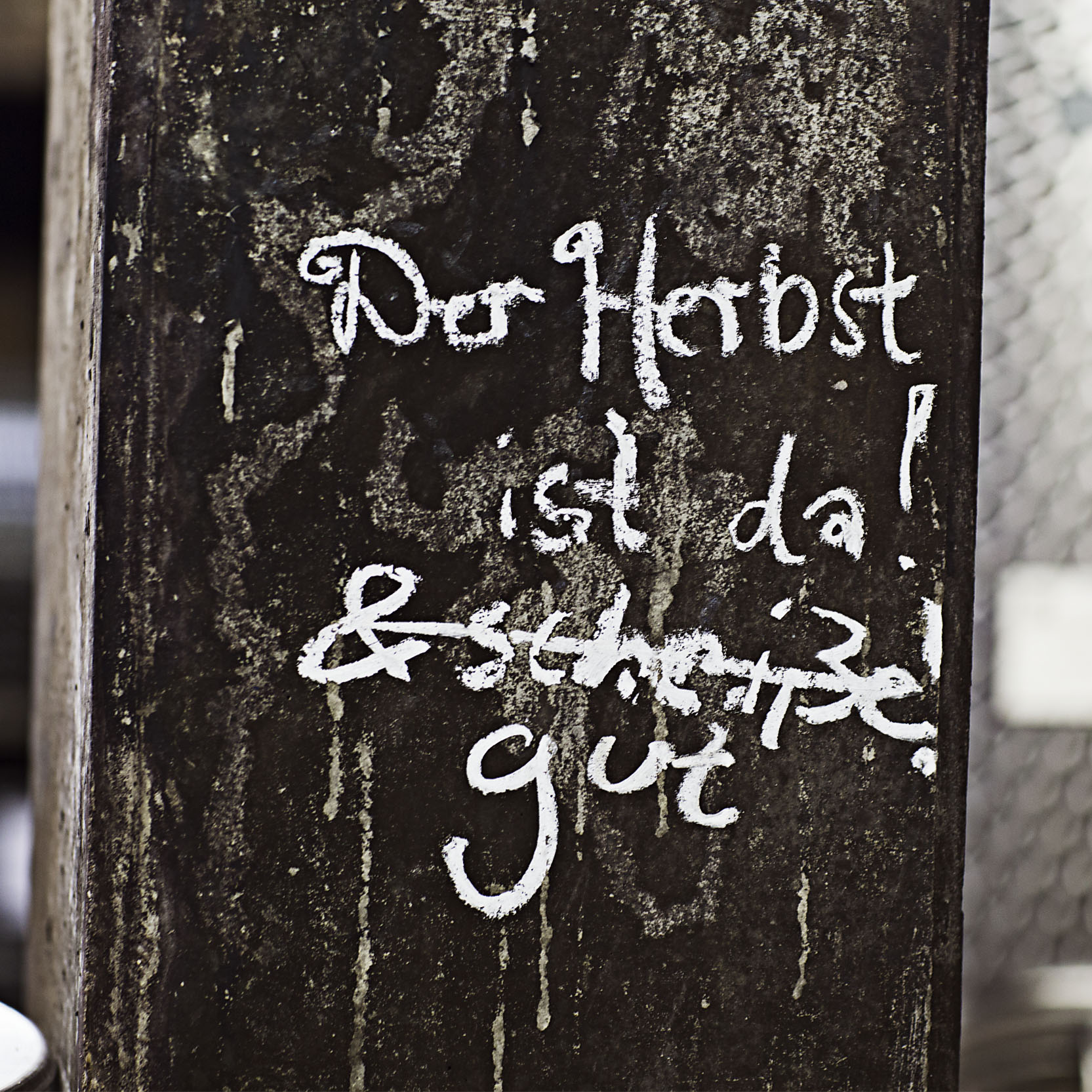 Weinlese, Mosel, Weingut Franzen