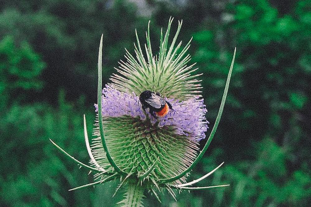 naturgartenseele-32.jpg