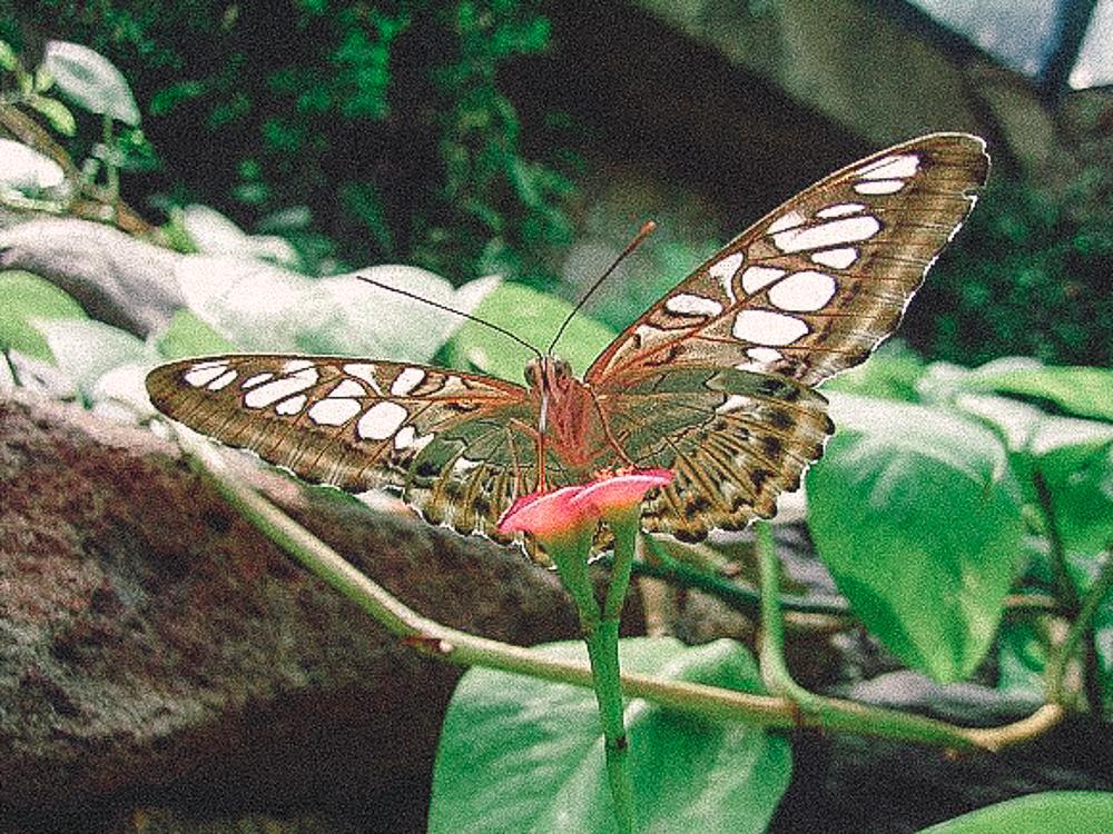Glasflügler im Naturgarten