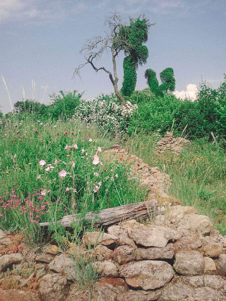 Ein Naturgarten mit großer Blumenwiese