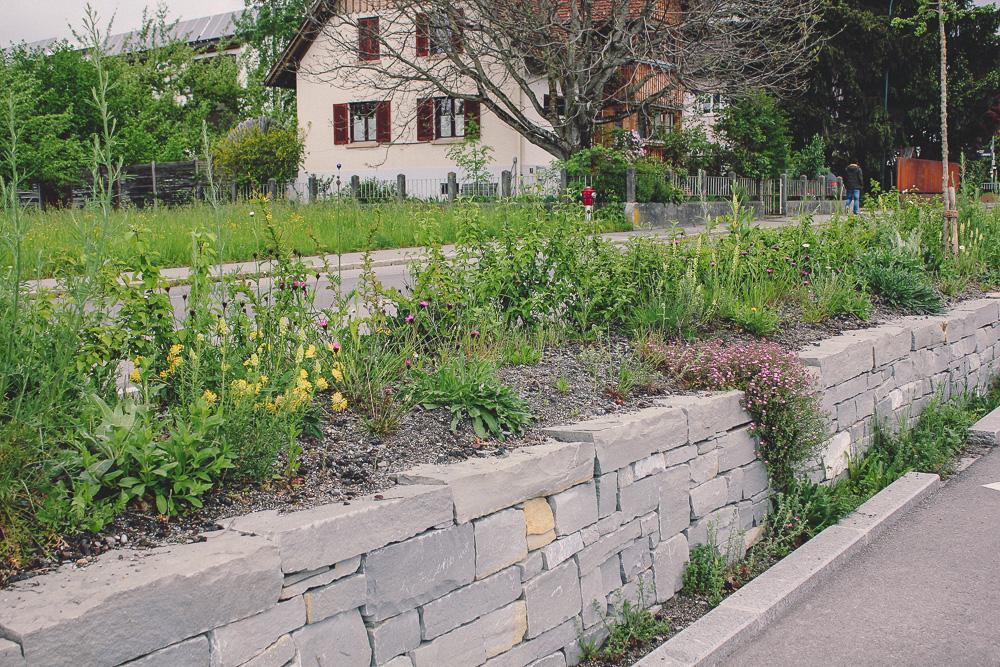 Bienenfreundliche Natursteinmauerbepflanzung.jpg