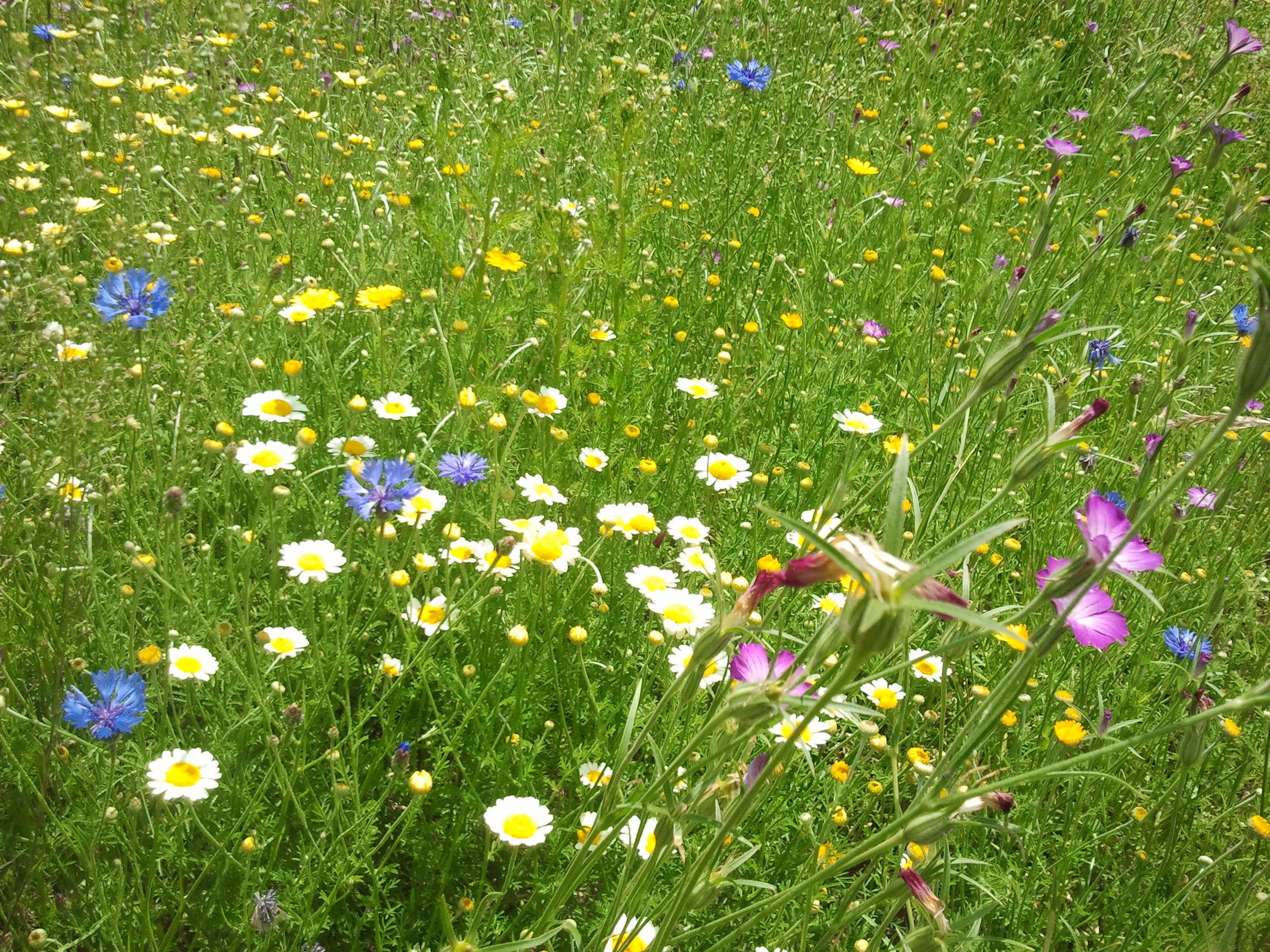 Bunte Wildblumenwiese