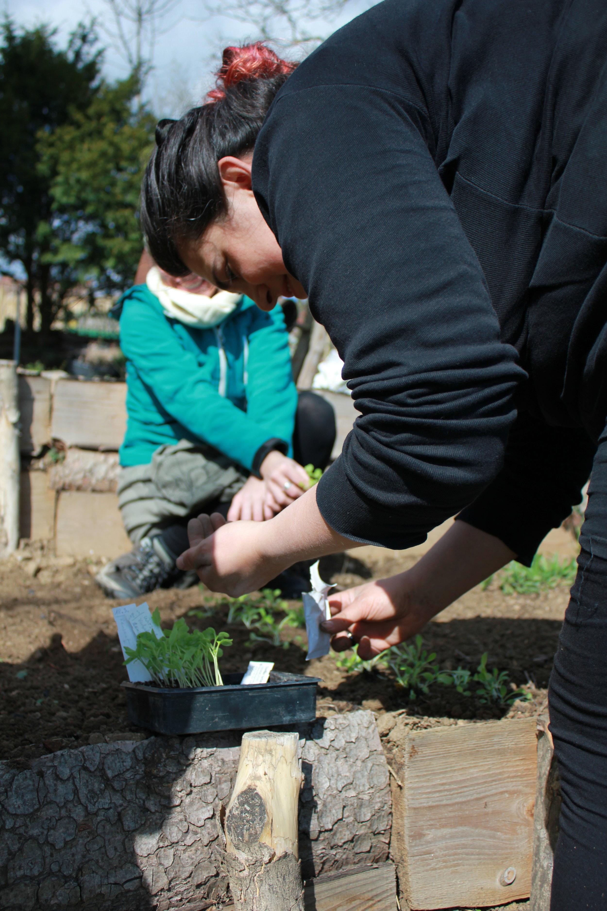Gartenbegleitung im Gemüsegarten