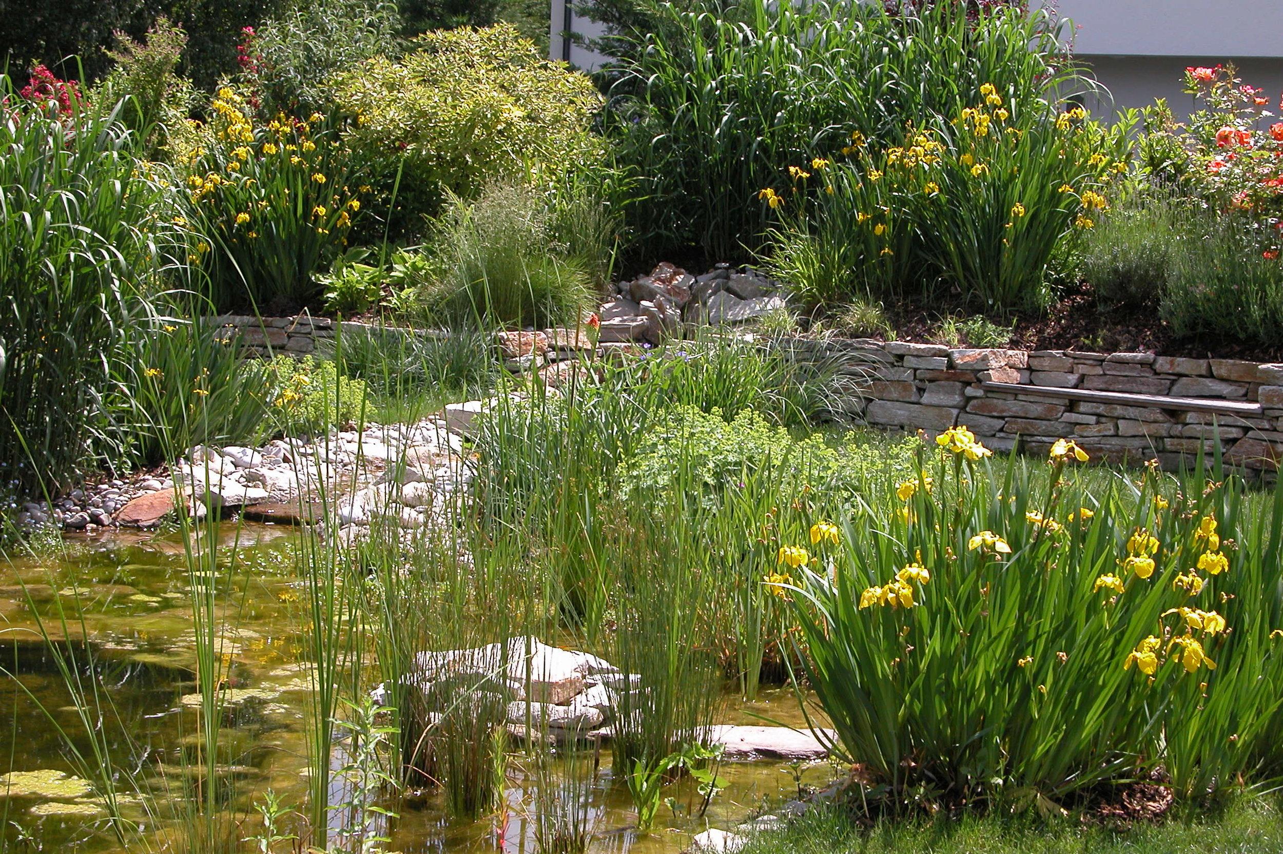 Naturteich im Naturgarten