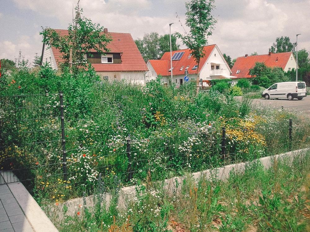 Bunte Blumenwiese tut der Naturgartenseele gut