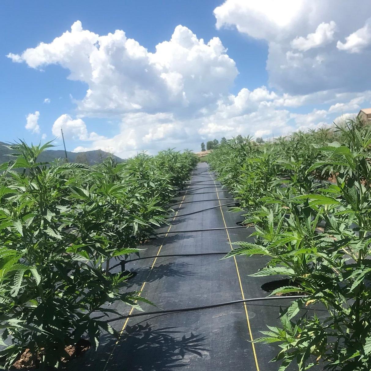 plantingseason.jpg