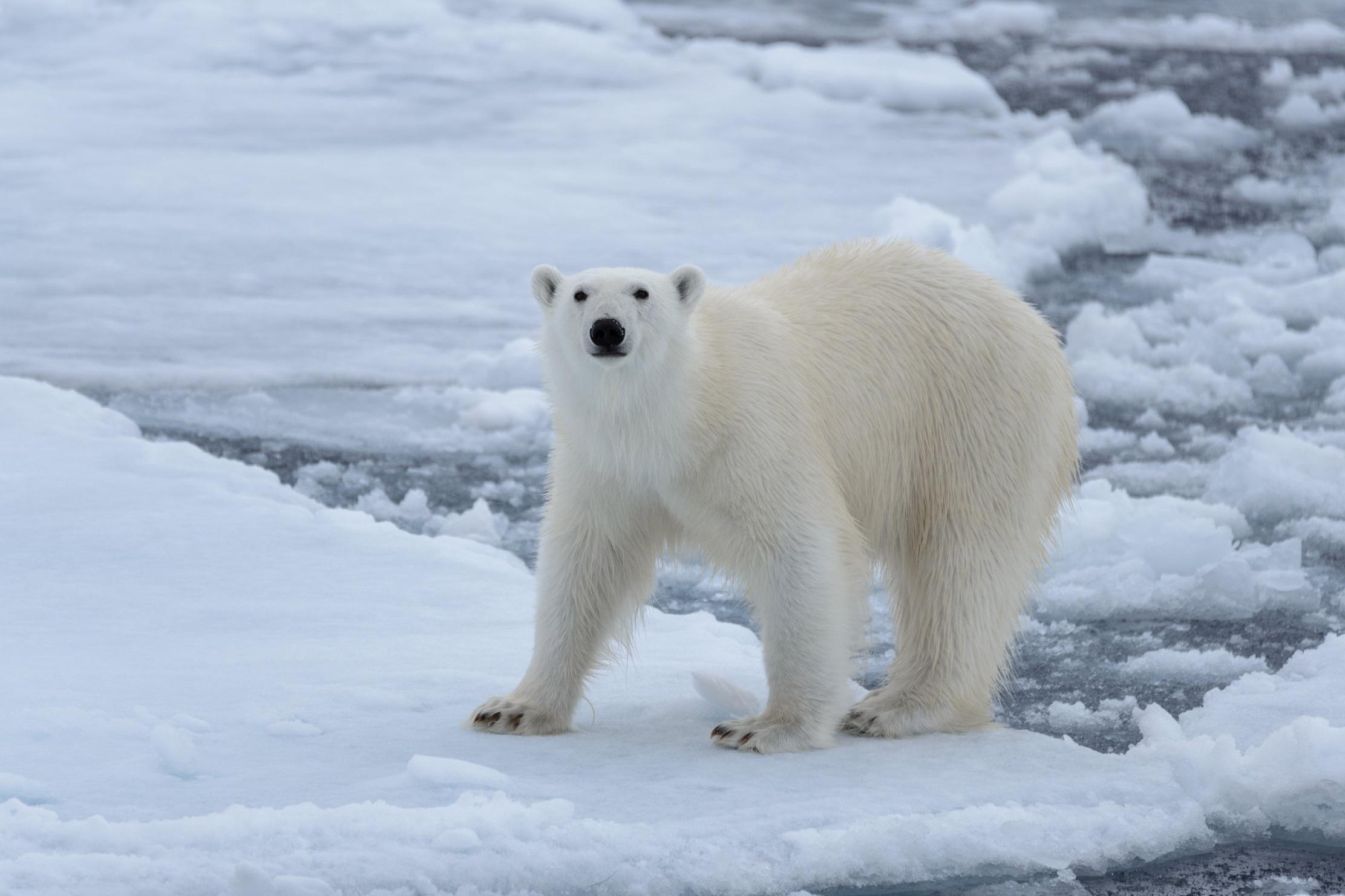 World Wildlife Fund: Fight Climate Change -