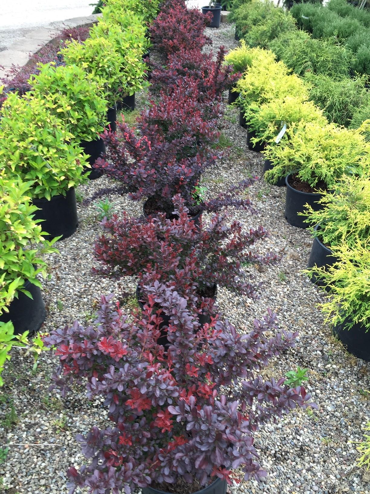Plants-GardenC5.JPG