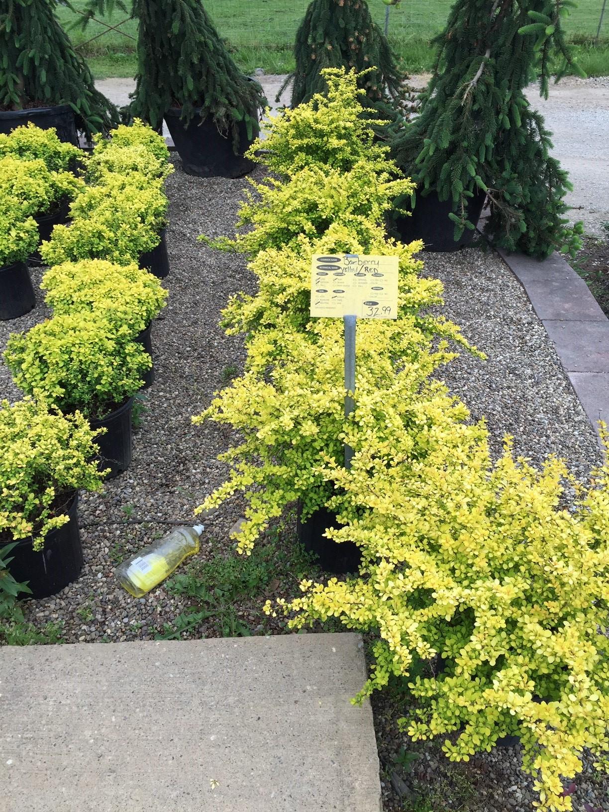 Plants-GardenC2.jpg