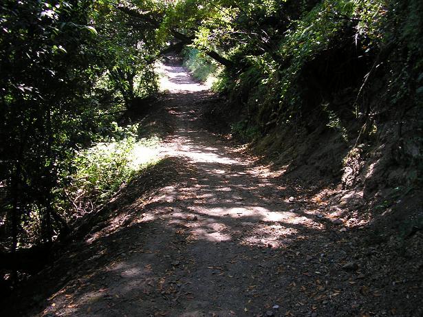 The Hayward Plung Trail (MTBR Forums)