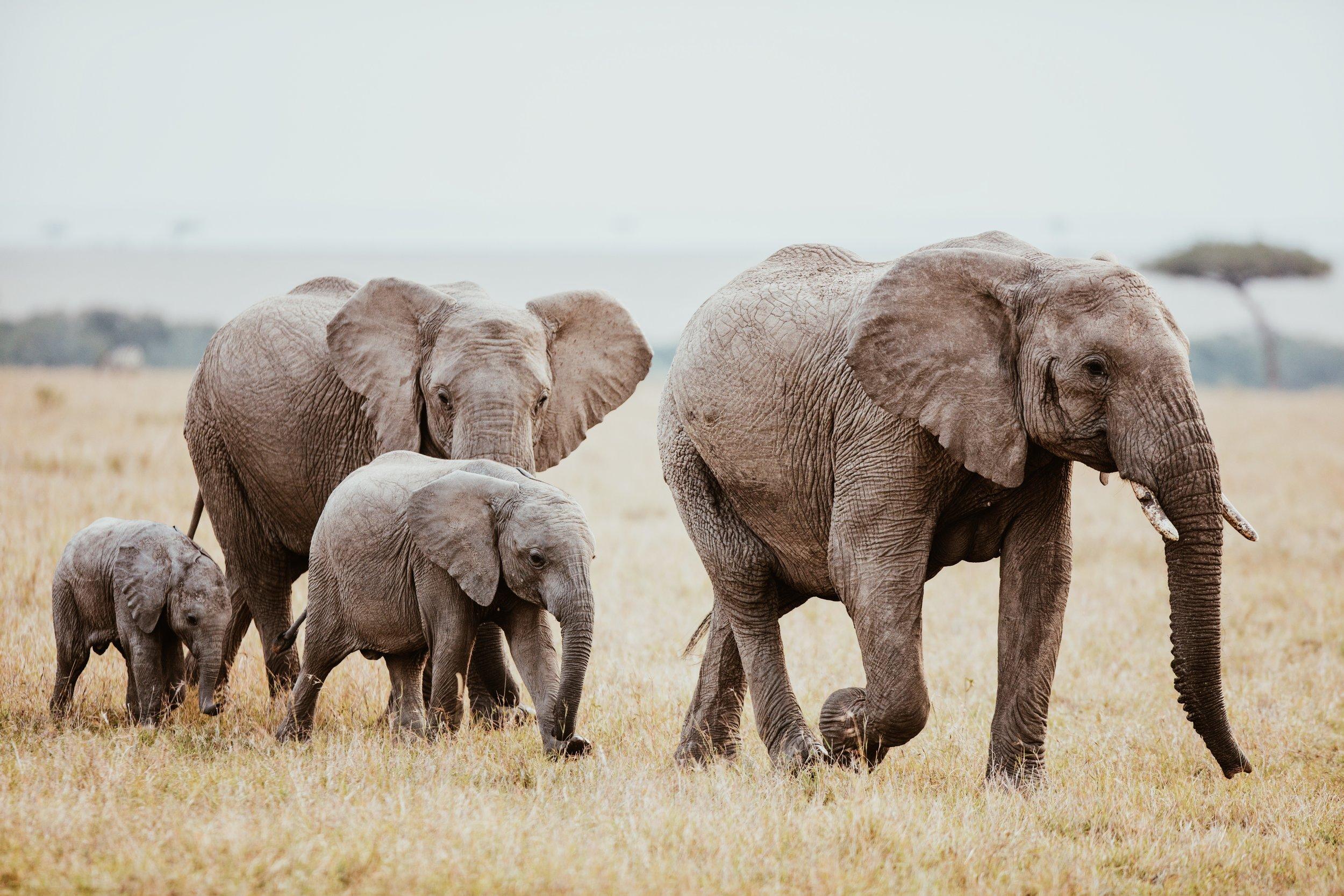 KENYA - Artisans + Conservation