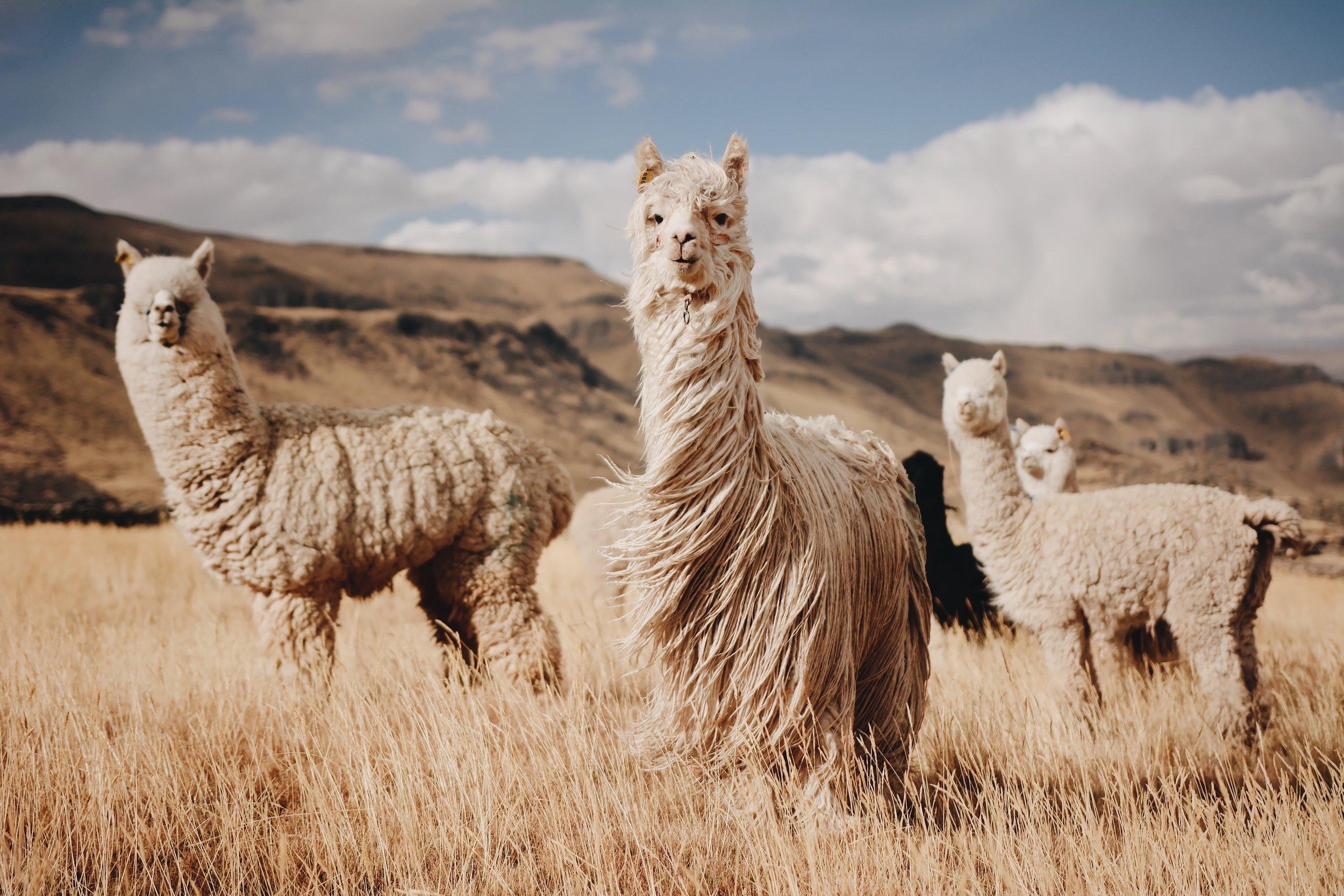 PERU - Sacred Valley Excursion