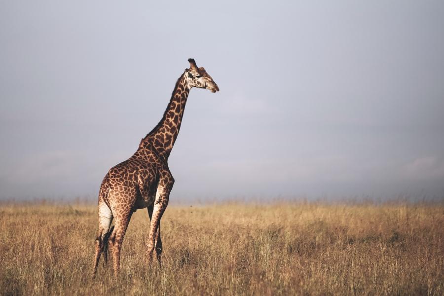 Fernweh Kenya - Lori Blythe Photography-15.JPG