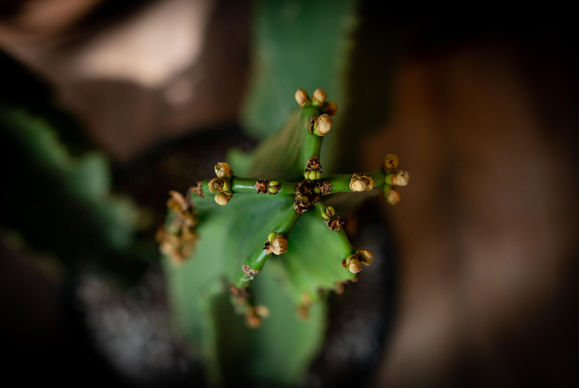 top of cactus.jpg