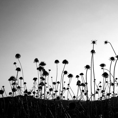 bw-flowers.jpg