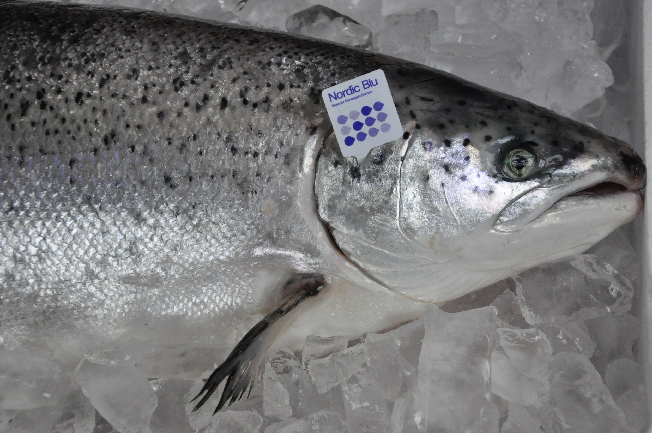Feed innovations are key to the fish's leading environmental rankings. Nordic Blu Salmon are fed a custom diet with a higher concentration of Omega-3 fatty acids than conventional feed and with only 17.3% marine content.