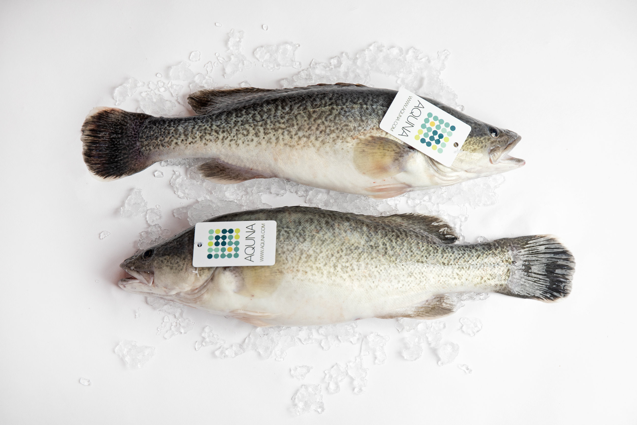 Aquna Murray Cod are pond-raised in off-bottom cages, avoiding any muddiness in the taste.