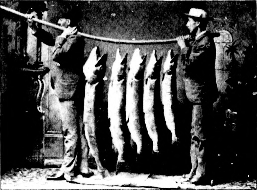 vintage salmon Quebec.jpg