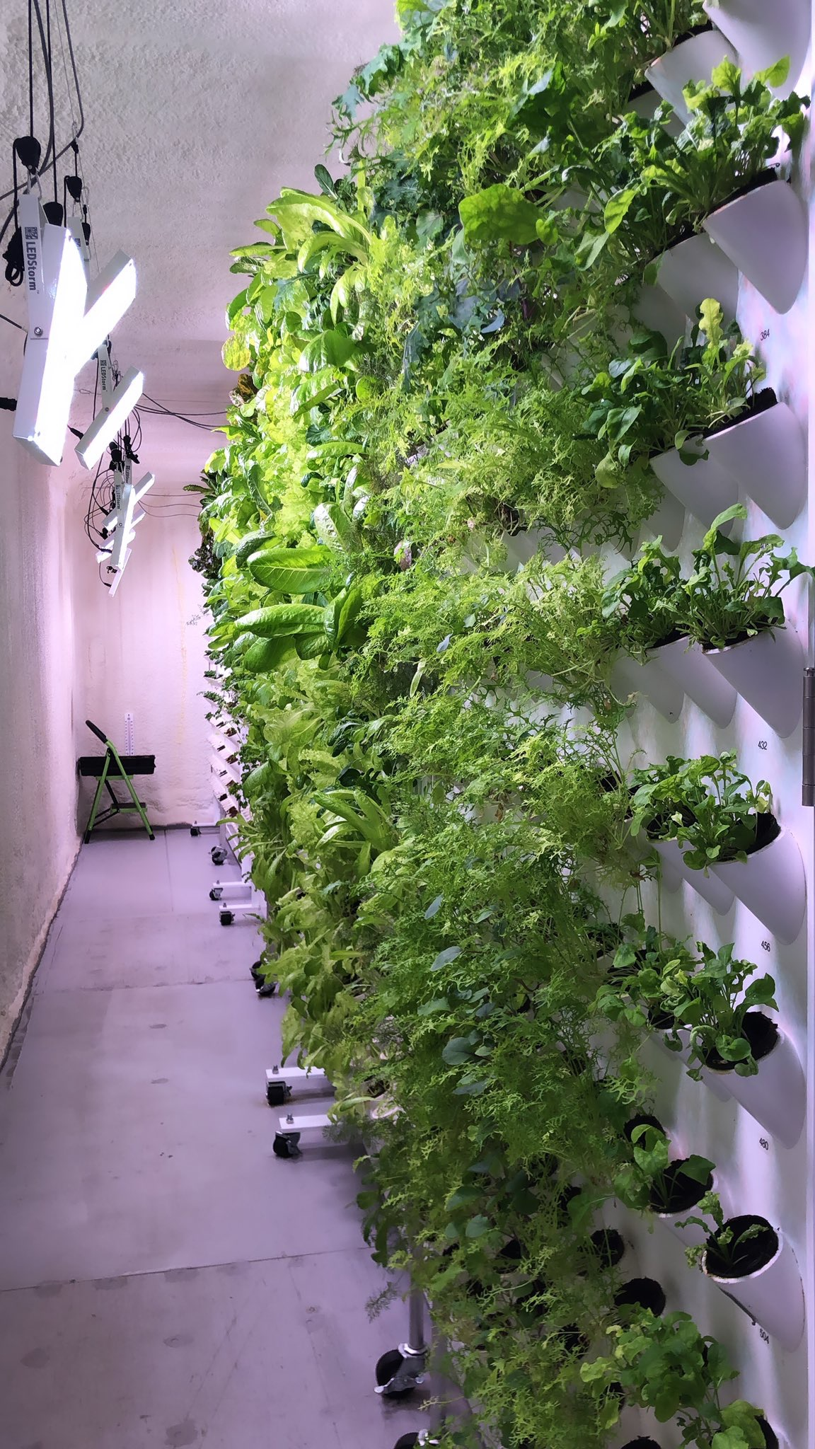 Earth Ponics Grow Walls inside our climate controlled environment.
