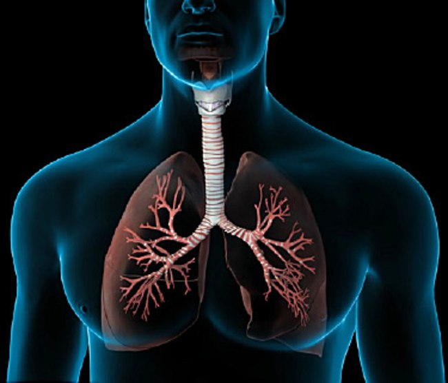 375x321_nucleus_how_your_lungs_work_video.jpg