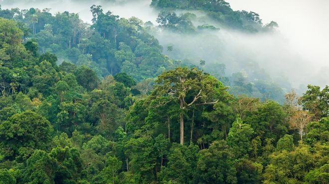 jungle-morning-fog.jpg