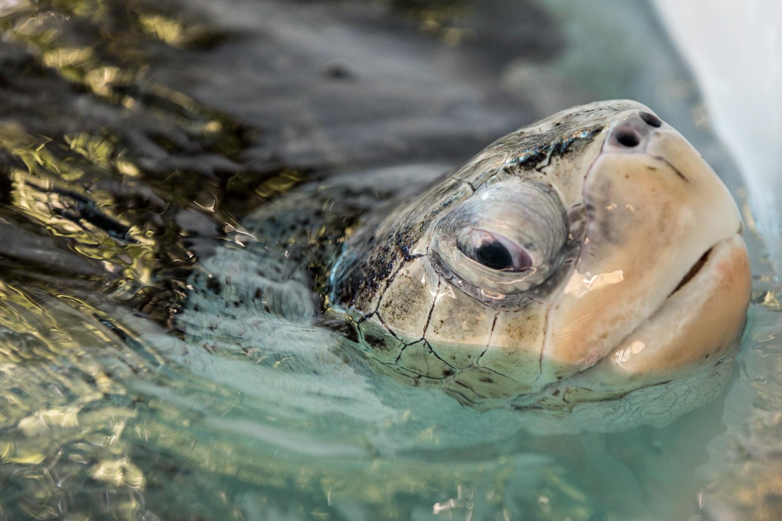 Cairns_Turtle_Rehab_Centre-LMP-11.jpg