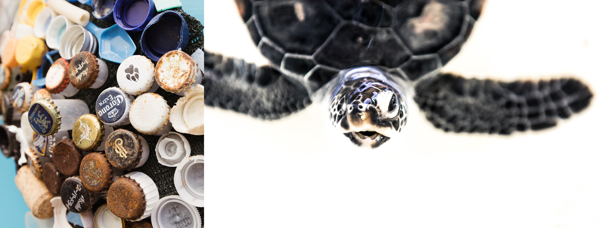 Above is baby Donatello, found in a nest at Cowley Beach he had lost his right eye, likely chewed by ants.
