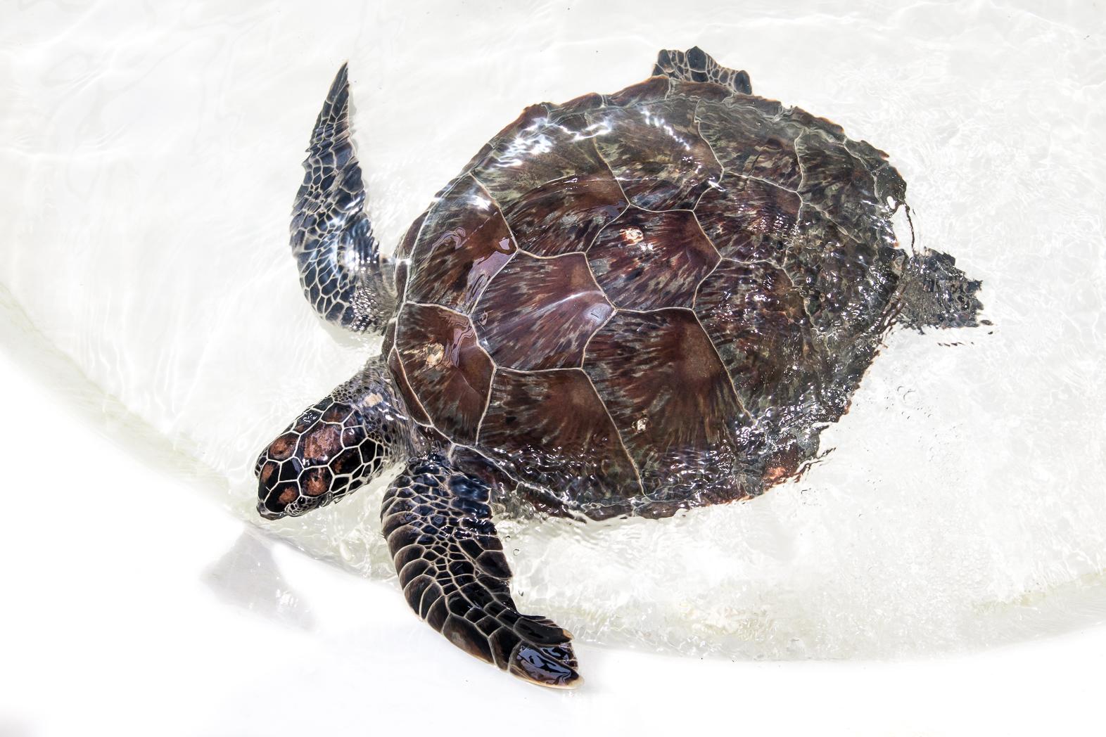 Cairns_Turtle_Rehab_Centre-LMP-18.jpg