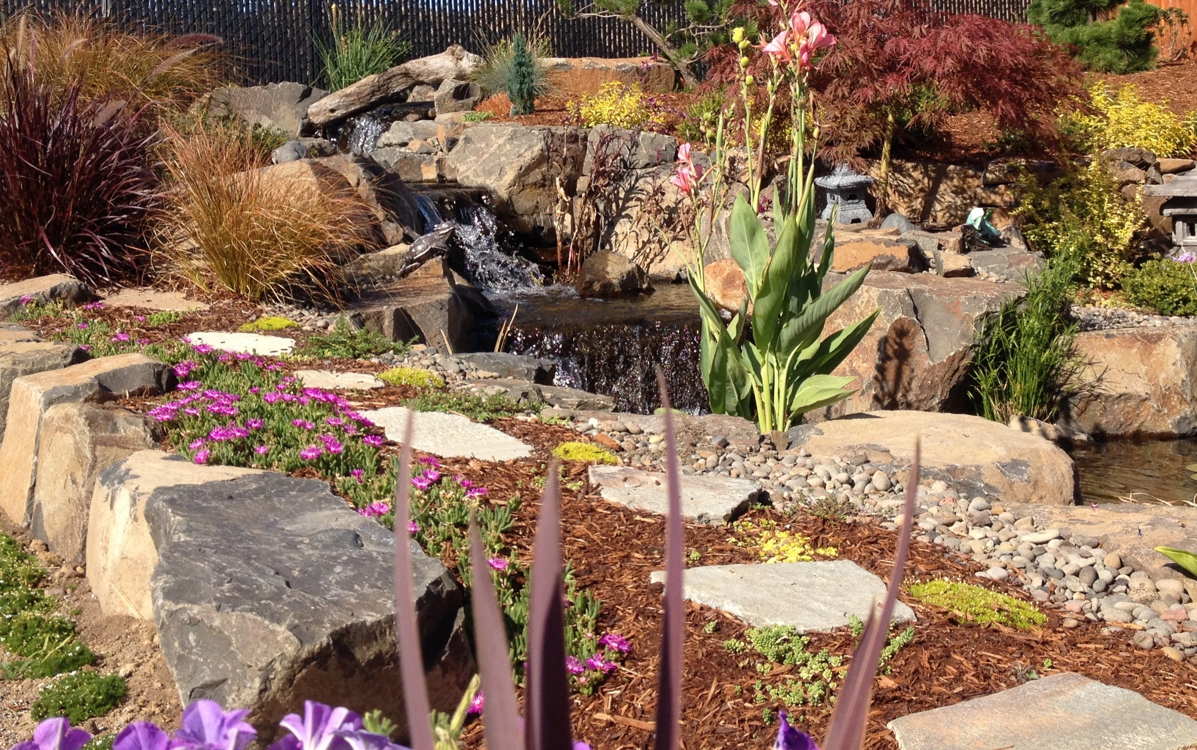 Plants and Gardens - Designing and planting a new garden, remodeling an older garden, or pruning trees and shrubs; we do it all. From eco-lawns and lawn removal to precise trimming of fruit trees, we can meet your landscaping needs.