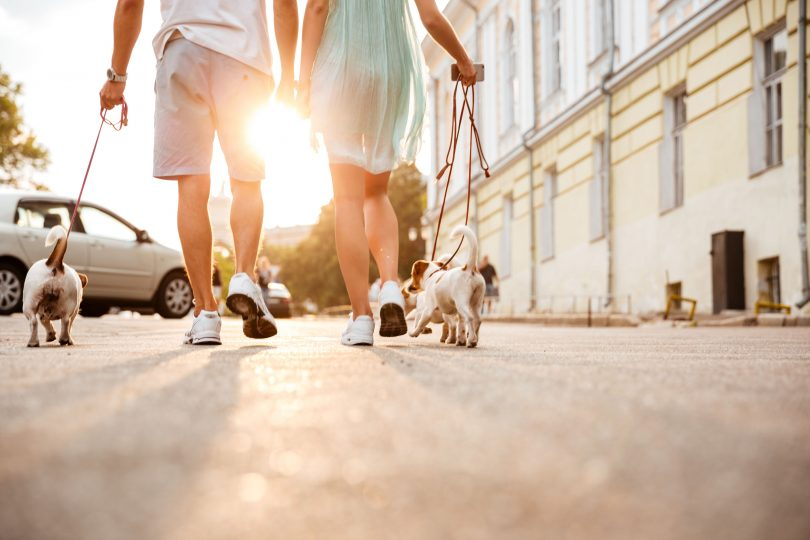 69398987_l-Cropped-image-of-a-friendly-couple-walking-dogs-together-on-the-city-street-810x540.jpg
