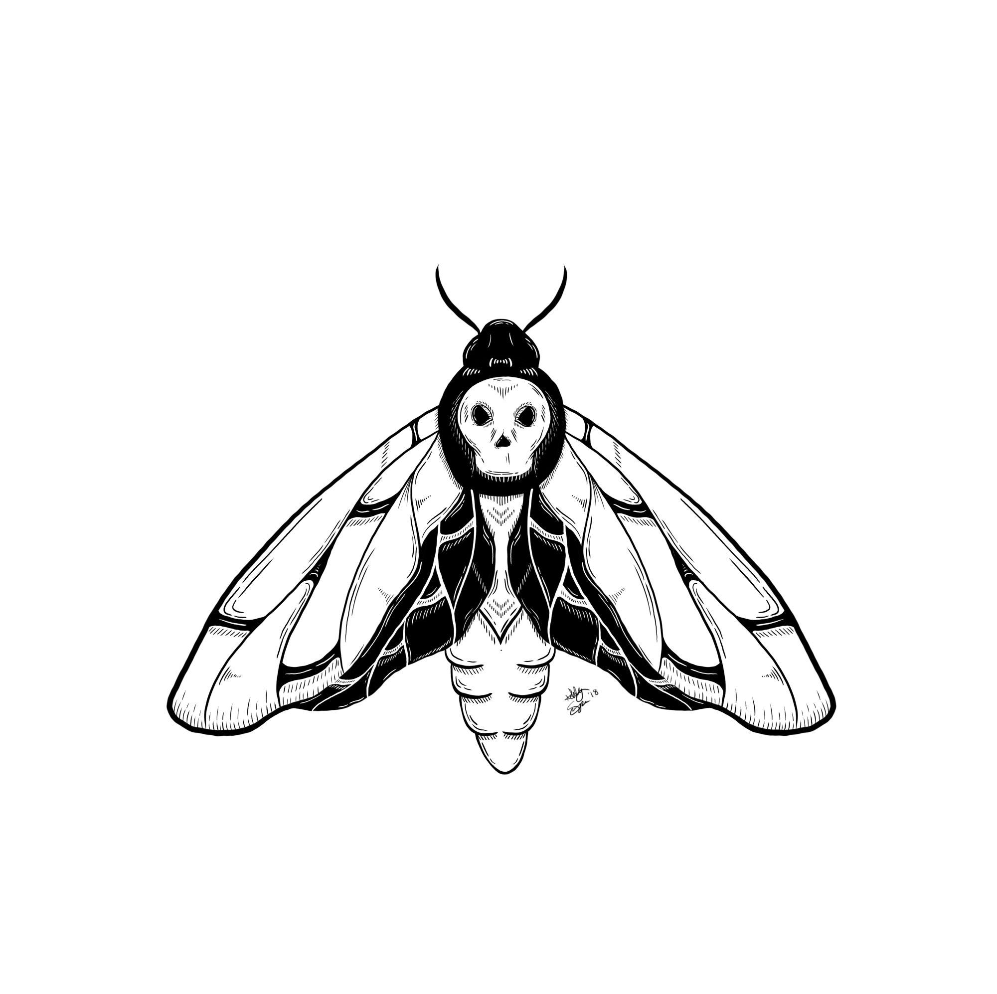 Death-head-moth-website.jpg