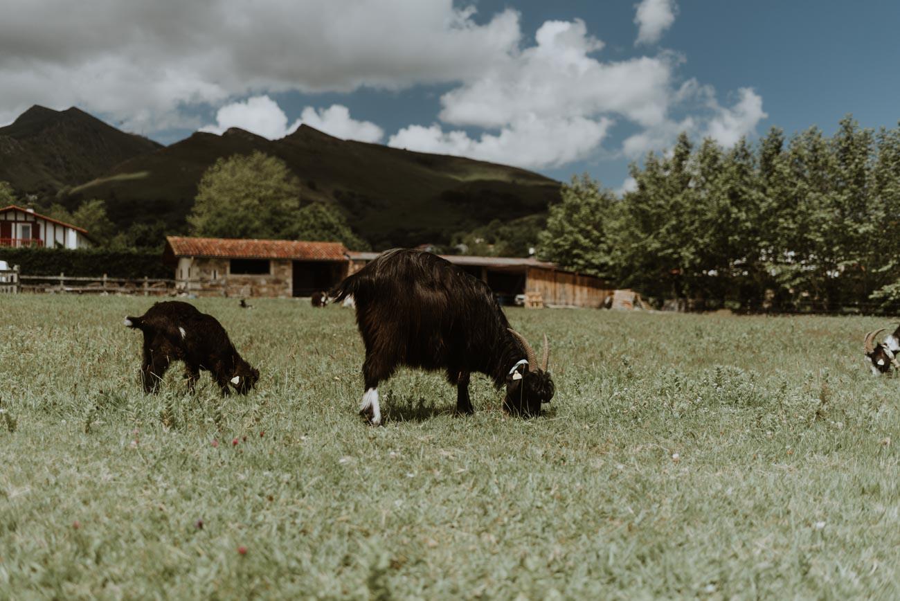 mariage pays basque david vinso photographe philippine et jérémy-WEB-3.jpg