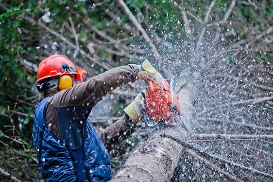 chainsaws shutterstock_181635461.jpg