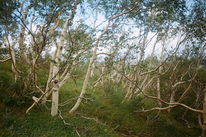 Birch Etna.jpg
