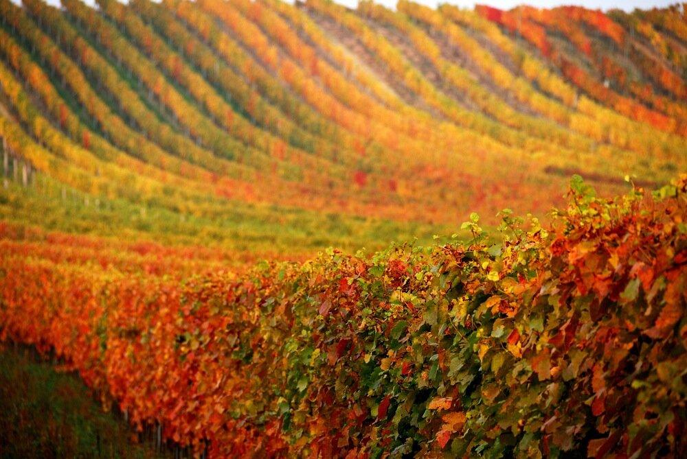 italian-vineyard-exotic-yoga-retreats.jpg