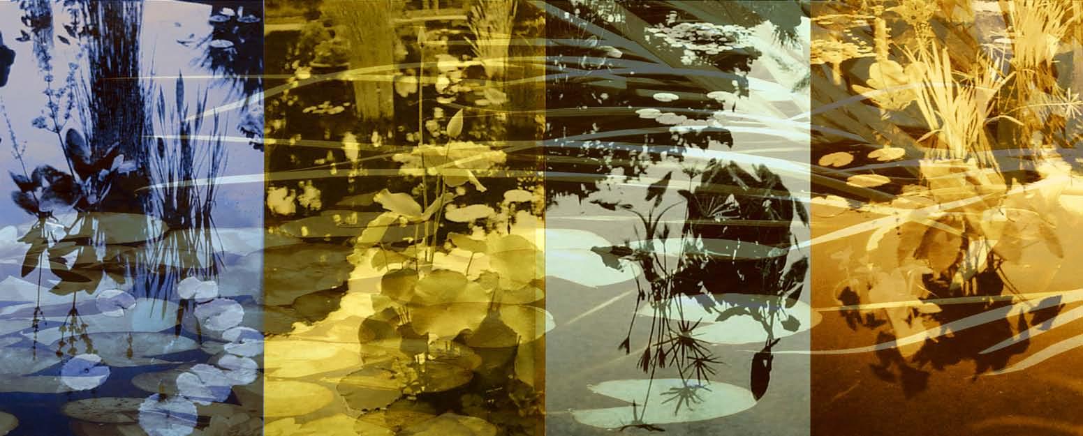 Pond Photo Reverie