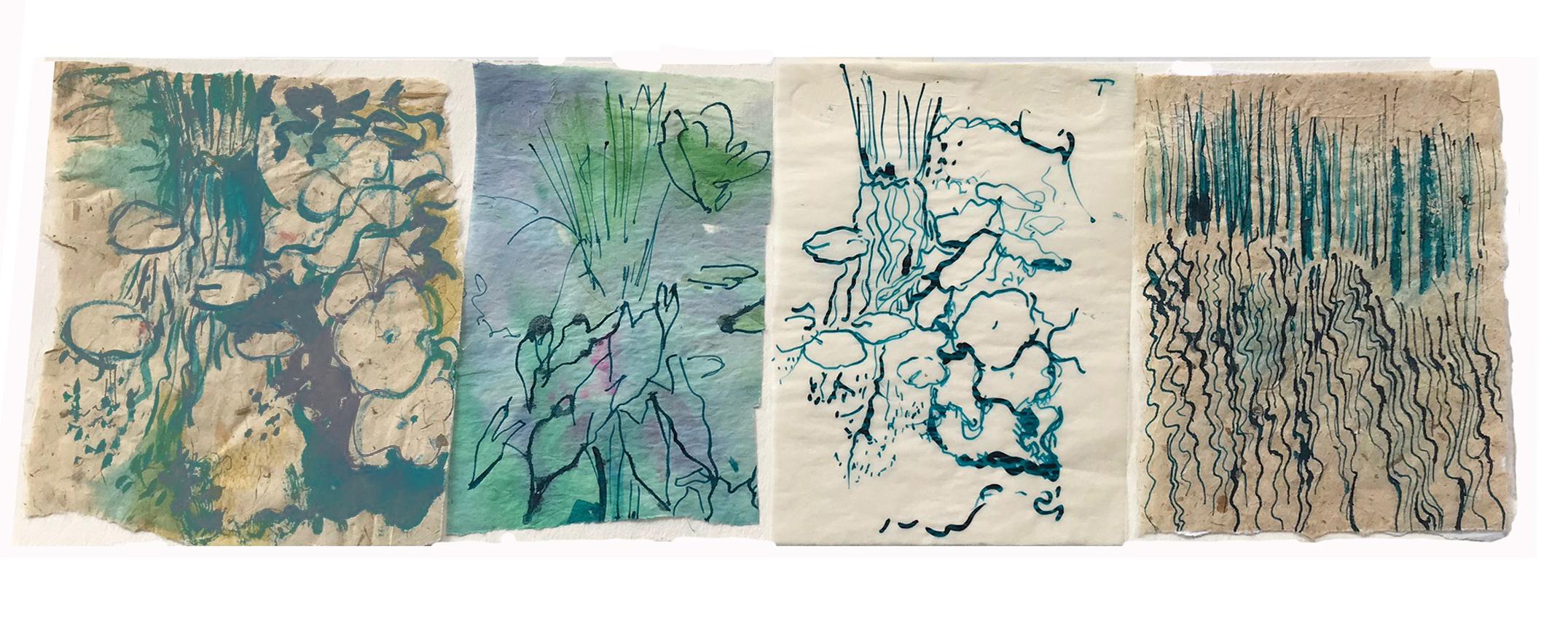 Sketch Series of Pond Plantlife
