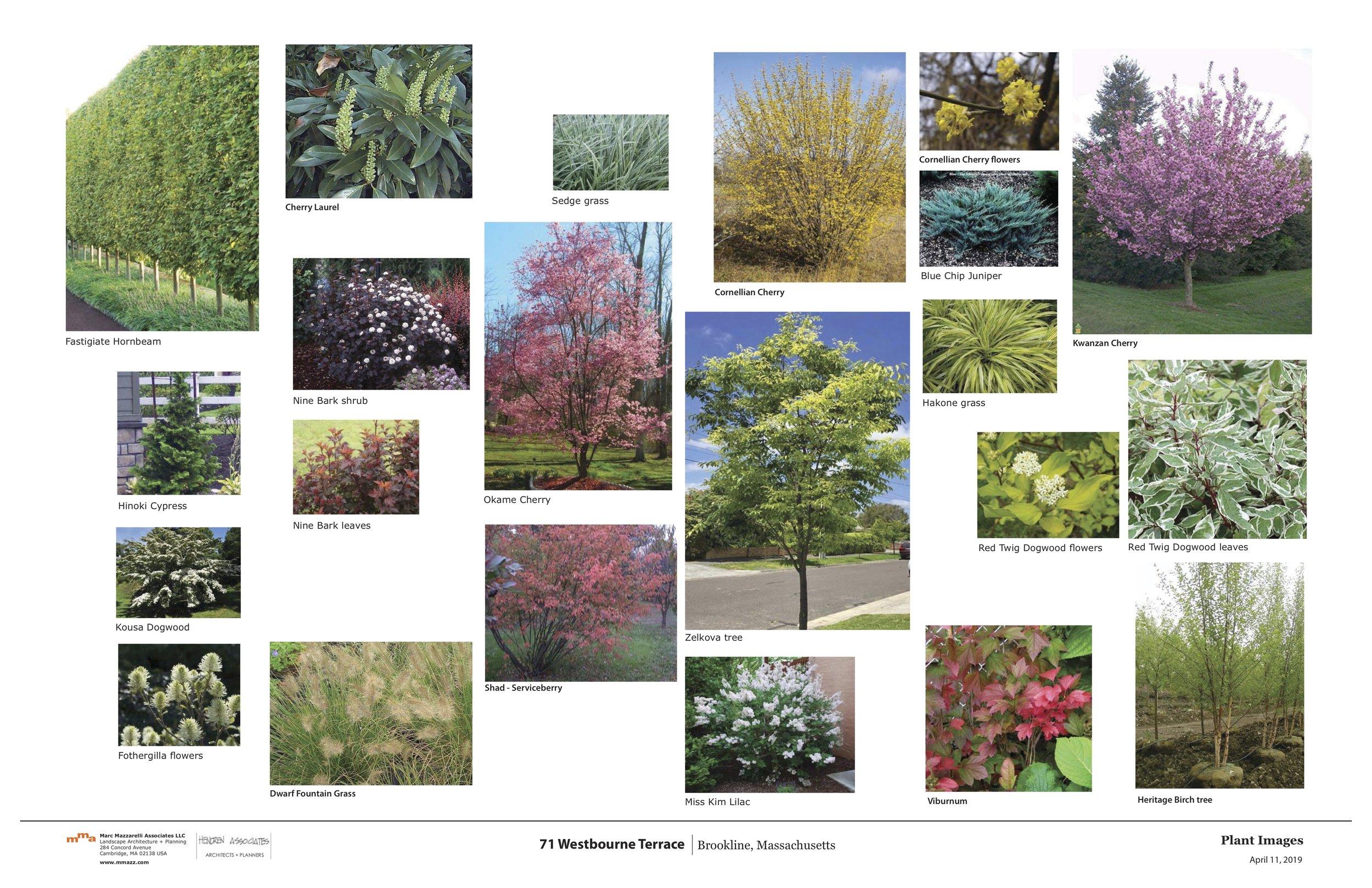71 Westbourne Landscape Revised 16' Driveway 4-29-18 2.jpg