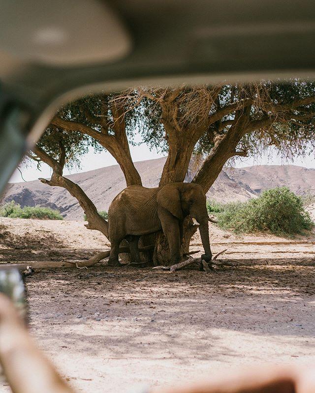 Au paradis des éléphants 🐘 . #namibia