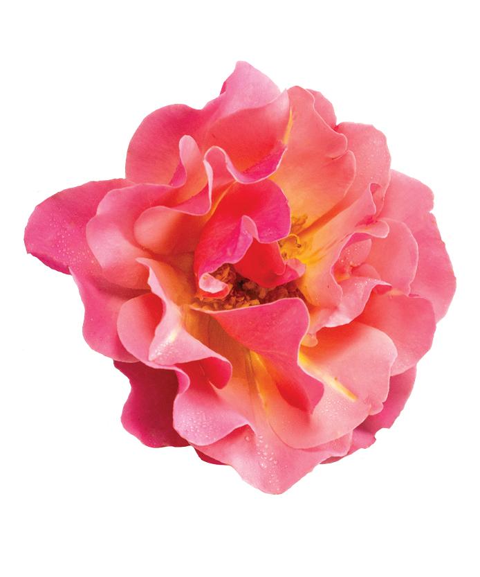 Rose Tequila® Supreme