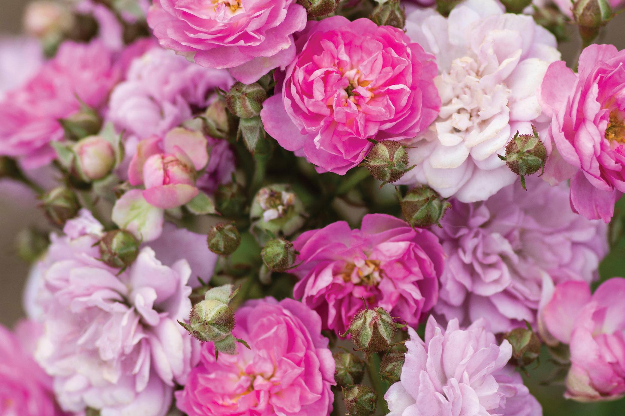 Bolero_Blooms_001.jpg