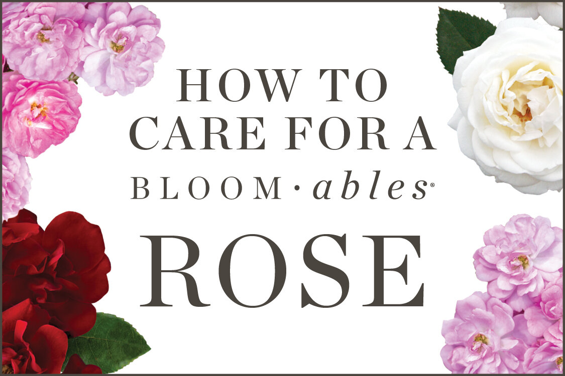 How To Bloomables