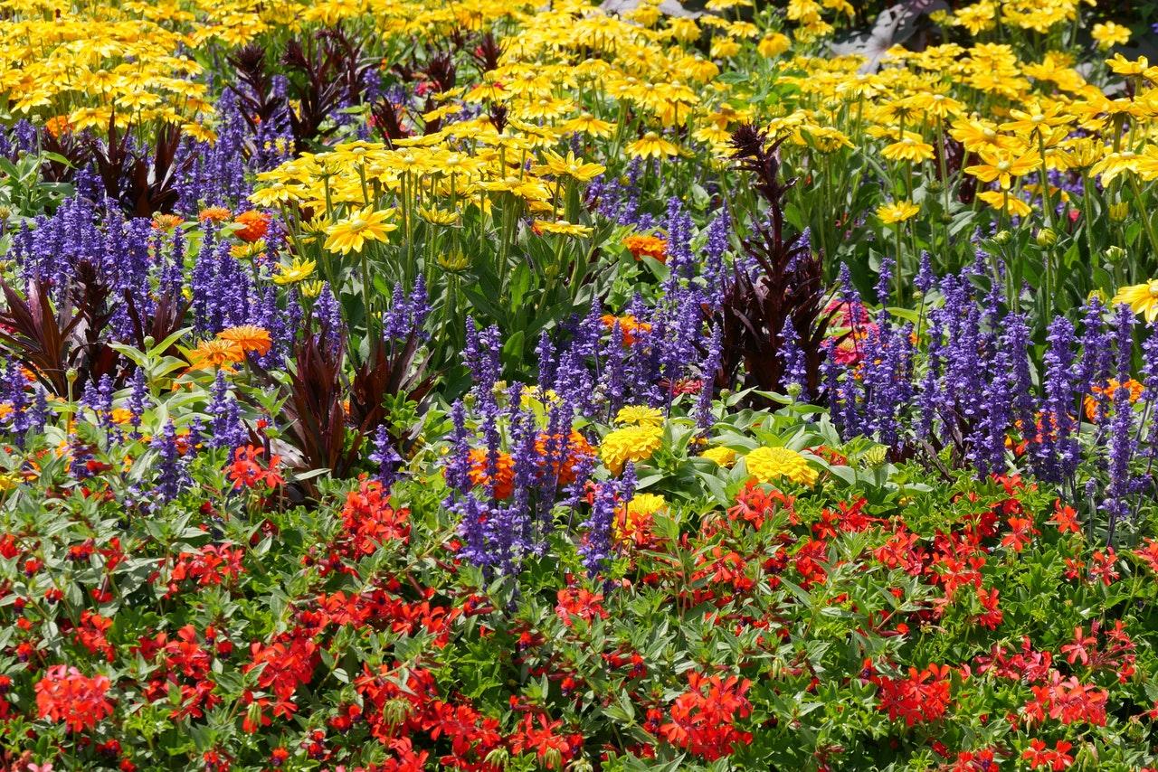 native plants, milkweed