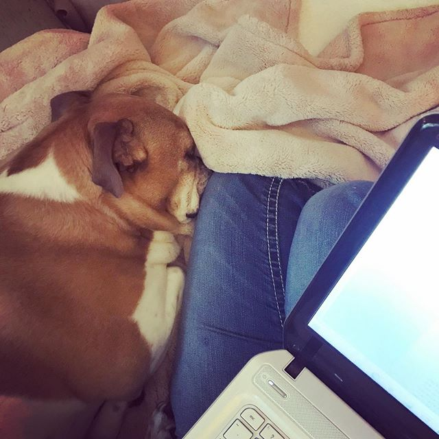 "Under the category of ""Happiness is"" in my world. Working from home on a rainy day, blue jeans, writing, and a warm spot on my leg from my sleeping pup's snores. 💞💫🐶#thelittlethings . . . . . . , #lifeisgood, #happylife, #beautifullife, #goodenergy, #happyhappy, #happyvibes, #happythoughts, #happysoul, #peacelovehappiness, #happypeople, #enjoyyourlife, #happyheart, #happinessis, #happinessishere, #happinessisinthesmallthings, #livefortoday, #happiness😊, #happymood, #allyouneedisloveandadog, #lifeisgood, #happyday, #grateful, #gratefulheart, #attitudeofgratitude, #gratefulheart, #writerslife"