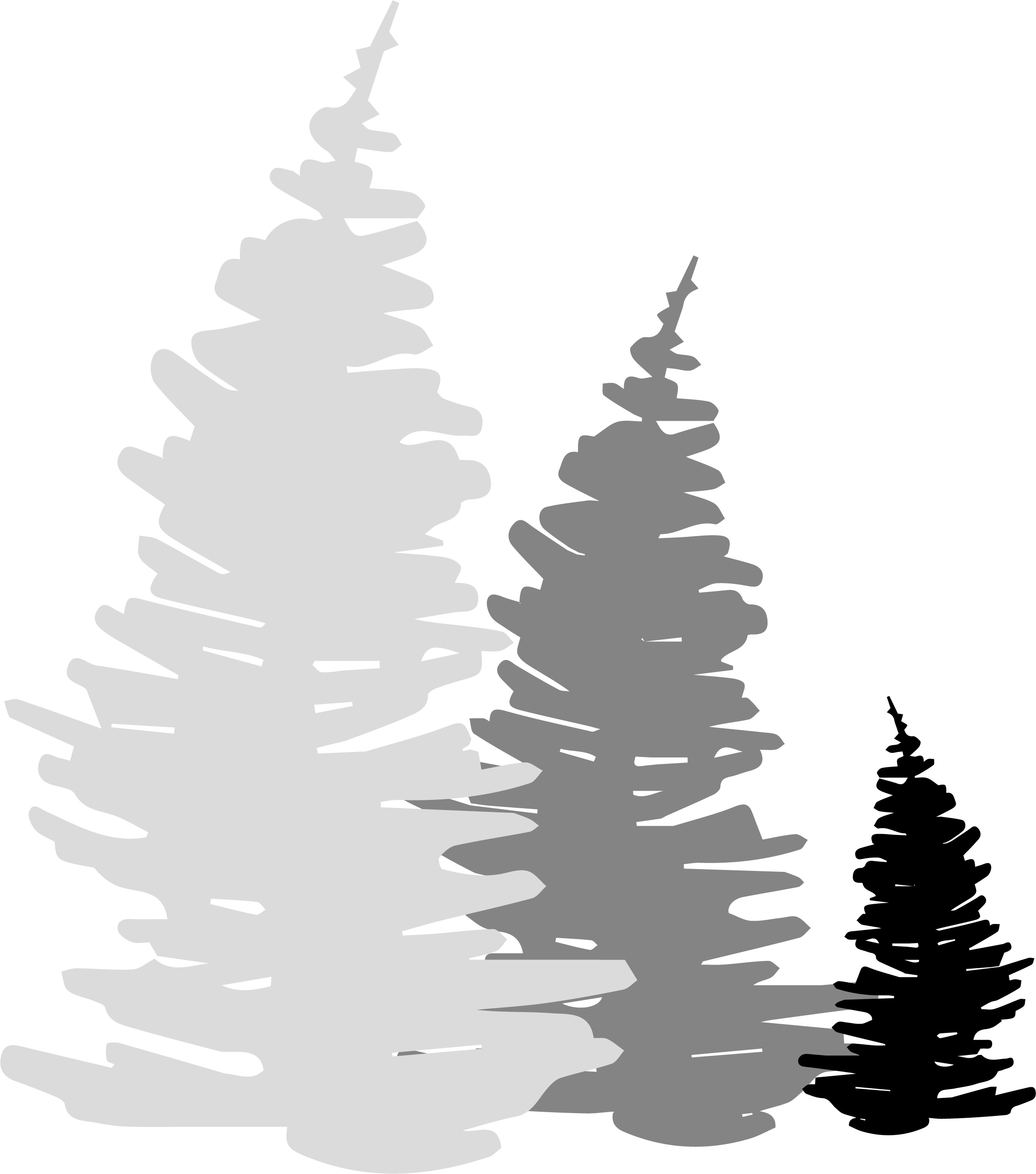 trailroots-trees.png