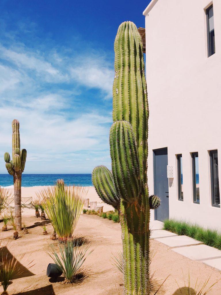 Saguaros and surf at Hotel San Cristobal