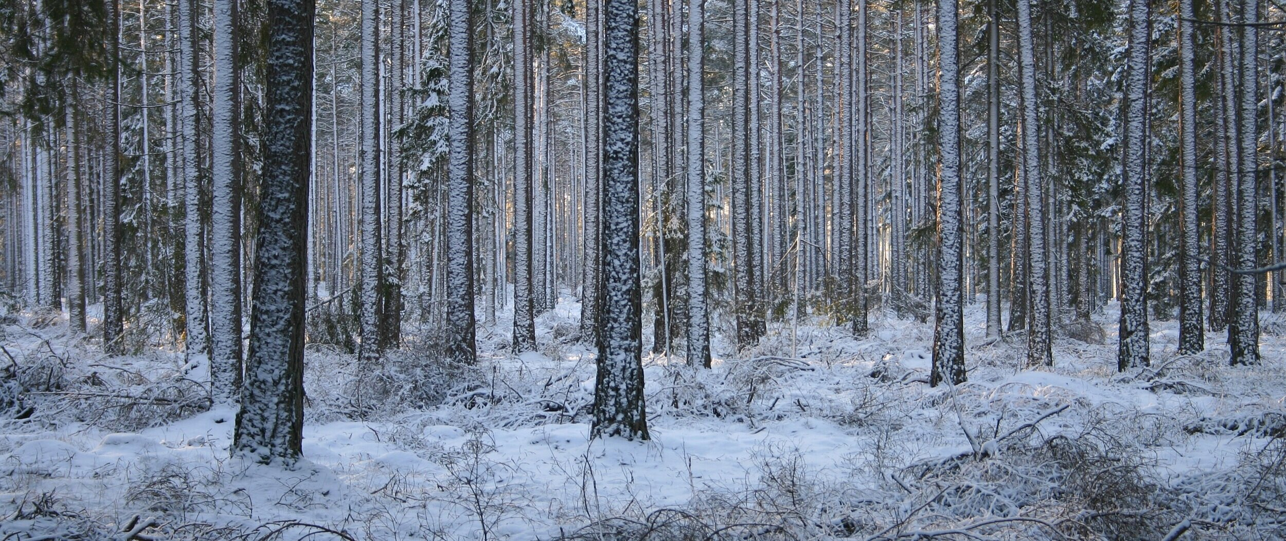 forest+in+winter+%281%29.jpg