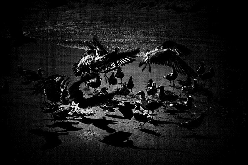 """Seagulls, 2016, Édition de 3, plaque gravée au laser, 48 x 72""""."""